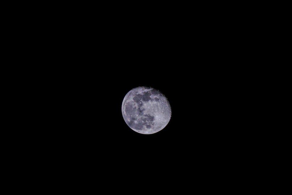 Moony.thumb.jpg.e44d7181a0faad00a1c917849583d7b3.jpg