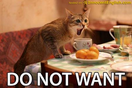 funny-cat-about-to-eat.jpg